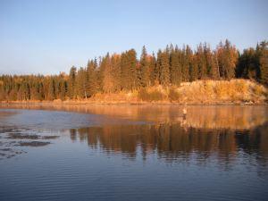 Late Season Morning Light on the Middle Kenai River, Alaska
