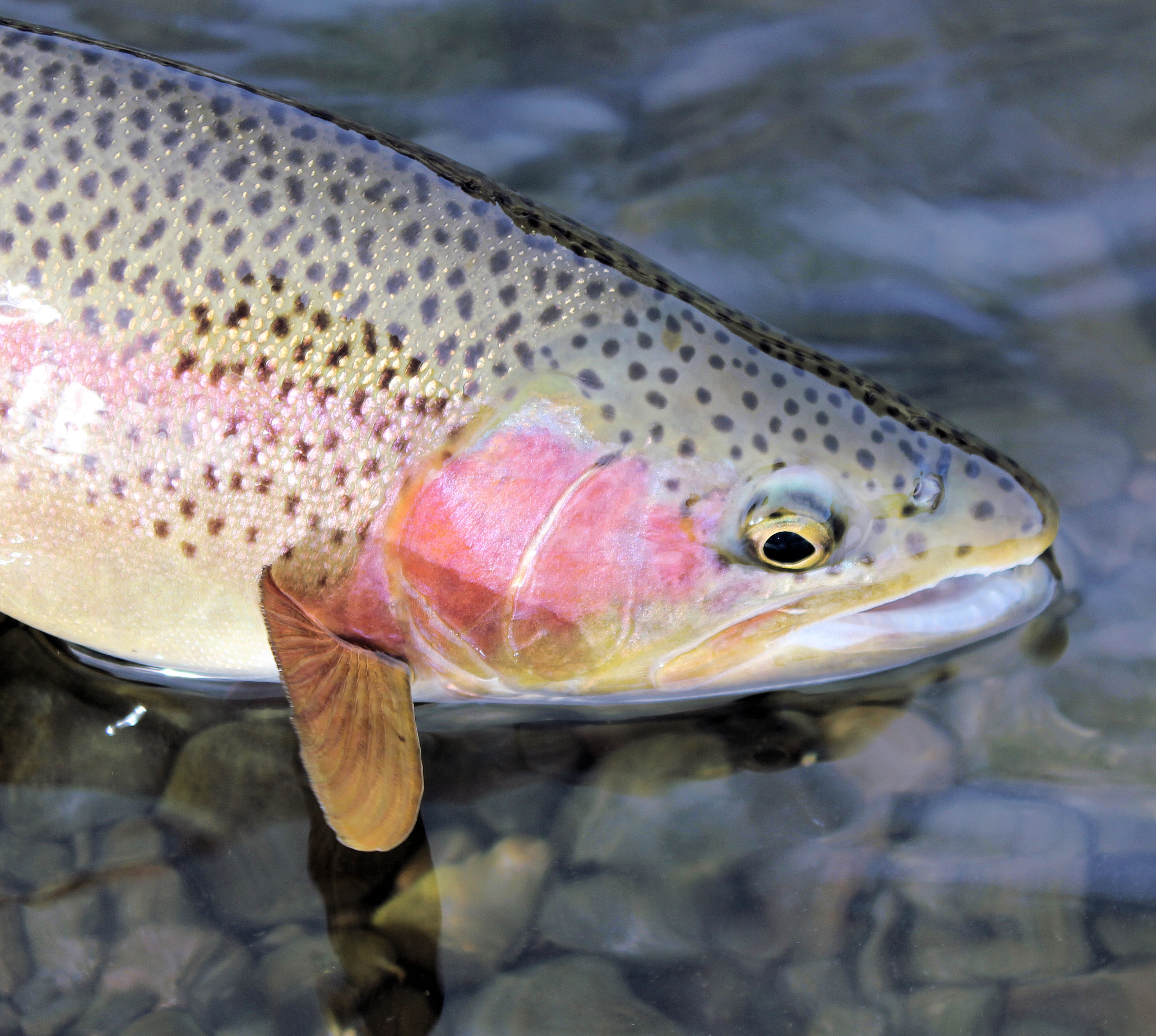 Fishy thoughts mystic waters alaska fly fishing for What does sustainable fish mean