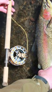 Trout Spey in Montana